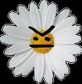 Gleeshers avatar