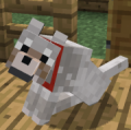minecrafter984 avatar