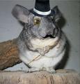 Ratinger avatar