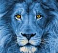 Big_Blue_Beast avatar