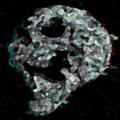 SmokeyBBQ avatar