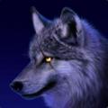 Is_Geo avatar