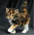 Kittency avatar