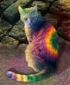 rainbow cat15 avatar