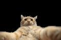 _WatchDoge_ avatar
