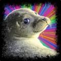 MrVarntex avatar