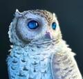 Wonderful Nerd avatar