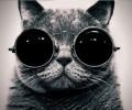 GSmith11 avatar