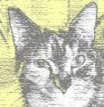 OldPAM1ner avatar