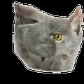 CatosBobu123 avatar