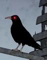 DataVinny avatar