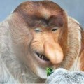 chamski avatar