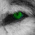 NomadicWolf avatar