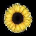 Muffineer avatar