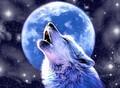 wolfguy2005 avatar