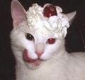 meowbo avatar