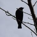 _little raven here_ avatar