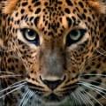 jaguarxjs avatar