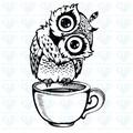 Amy Owl avatar