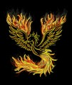 Phoenix_da_boss avatar