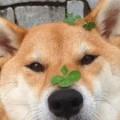 bunnyleaf avatar