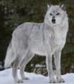 Wolves12345 avatar