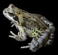 froggeultra avatar