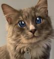 Am_Cat avatar