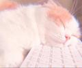 klef avatar