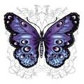 -Schmetterling- avatar