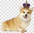 corgi_king avatar