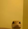 Ziemniak avatar