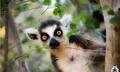 _Filip_Lemur_ avatar
