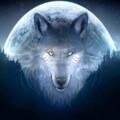 OysterWolf avatar