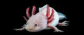 AxolotlGirl avatar