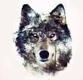 -wolfix- avatar