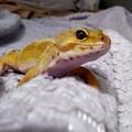 lemongeckos avatar