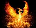 PhoenixFlight7 avatar