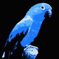 Oddchilly avatar