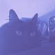 Meowyboy12 avatar