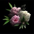 Monsieur_Purple avatar