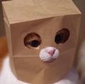 babykittens avatar
