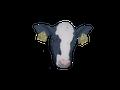 TheBlueberryCow avatar