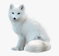 ArcticFox8035 avatar