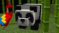 Chirroge avatar