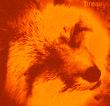 Skelmir avatar