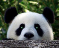 EvilPandaMan avatar
