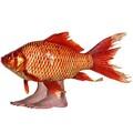 fishfoot77 avatar