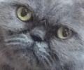 GoldenGizzmo avatar