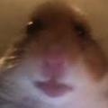 GrandNoni avatar